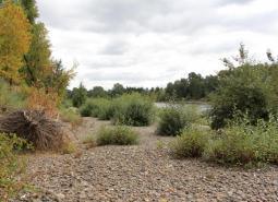 Middle Willamette River Floodplain