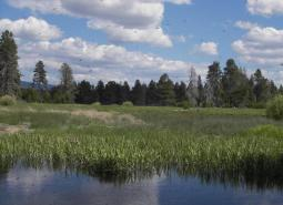 Forest and wetland habitats in the Klamath Marsh/Williamson River Conservation Opportunity Area, Oregon Conservation Strategy