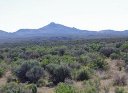 Sagebrush Habitats